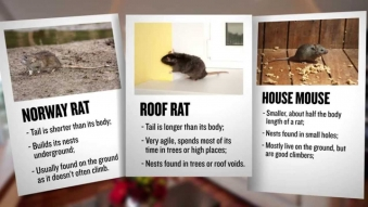 Embedded thumbnail for Kiwicare - Identifying Rodents